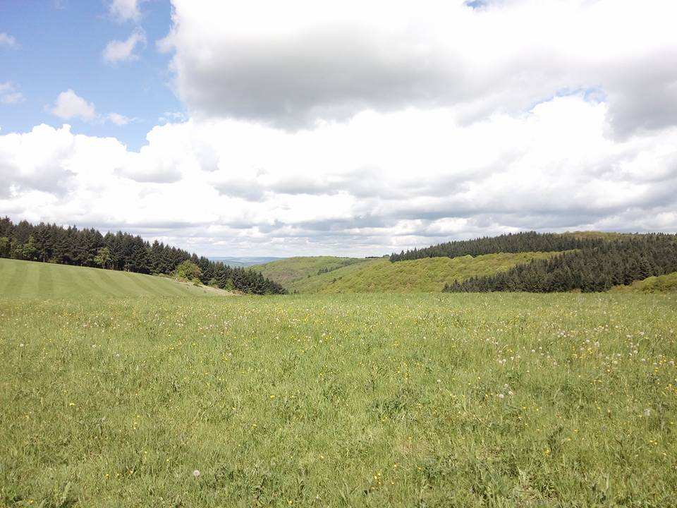 Moselsteig Seitensprung – Bernkasteler Bärensteig