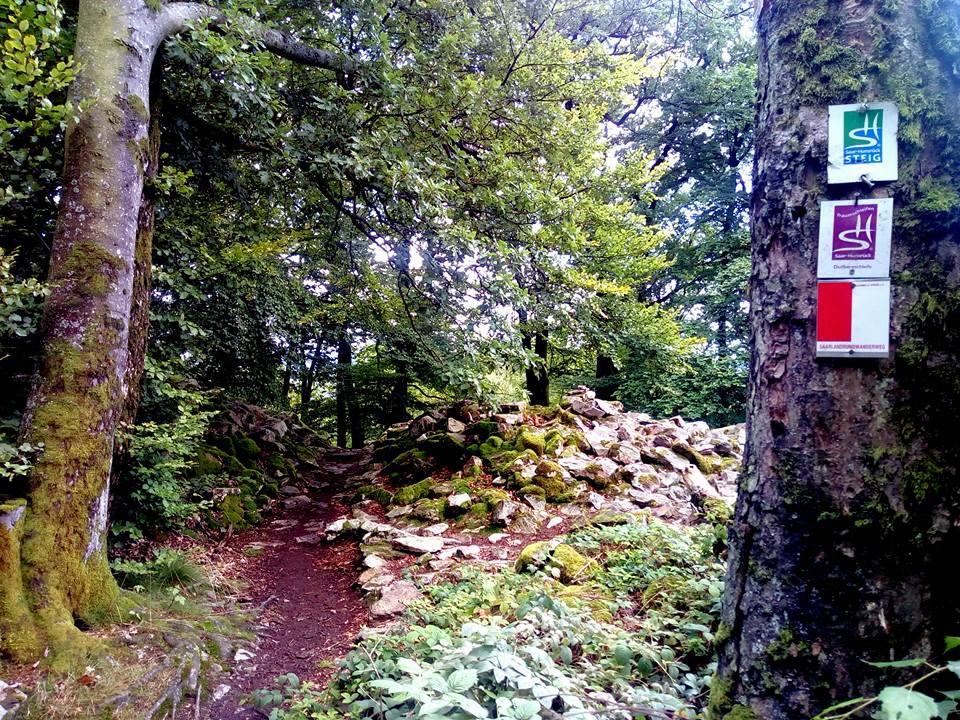 Nationalpark Traumschleife Dollbergschleife