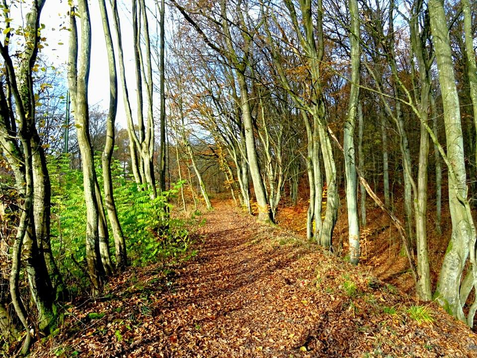 Dreischleifenweg Kohlwald