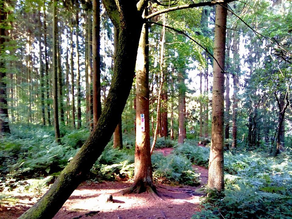 Traumschleife Der Hochwälder