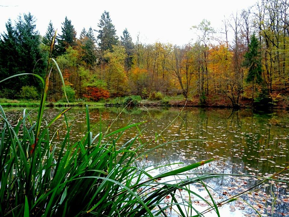 Höfertaler Wald Pfad