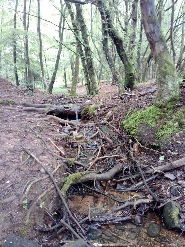 Traumschleife Kaltensteinpfad