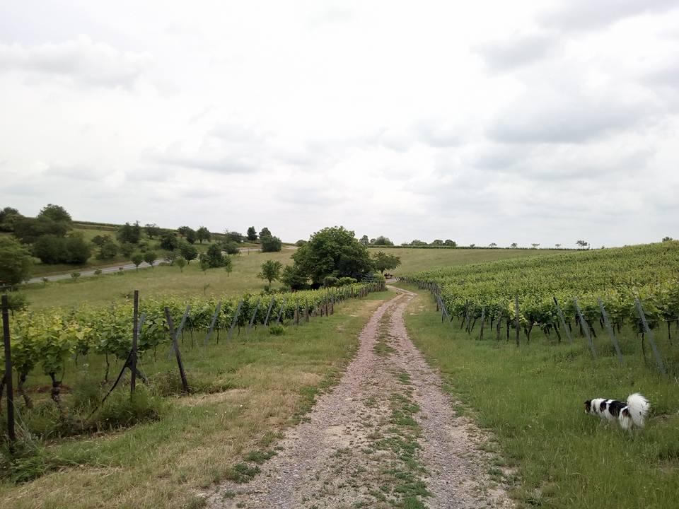 Panoramaweg Klingenmünster