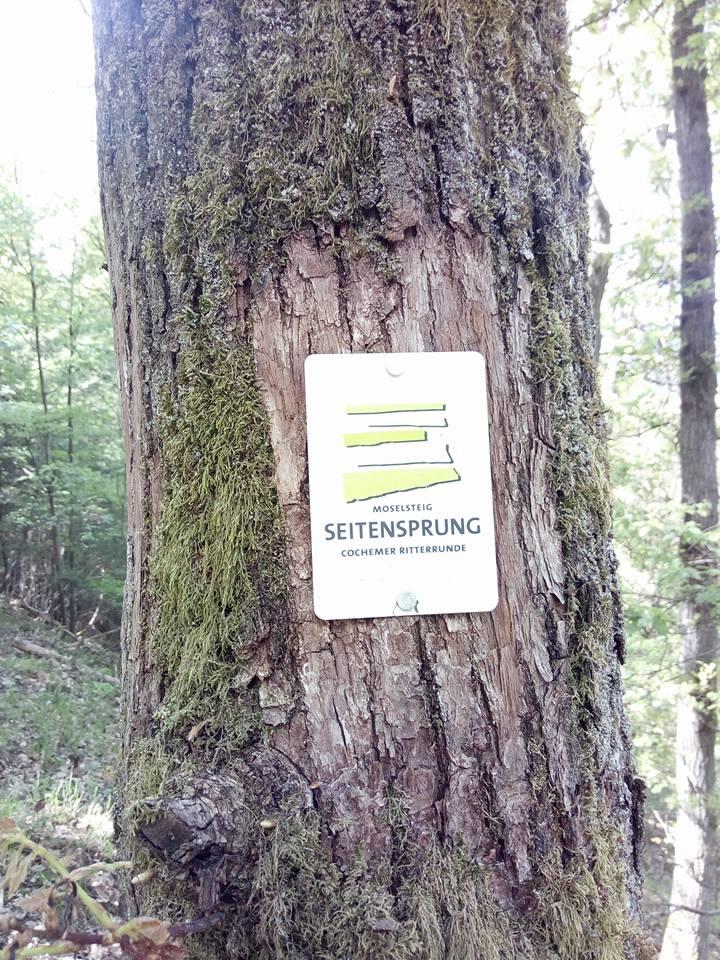 Moselsteig Seitensprung – Cochemer Ritterrunde Teil 1 Winneburg Runde