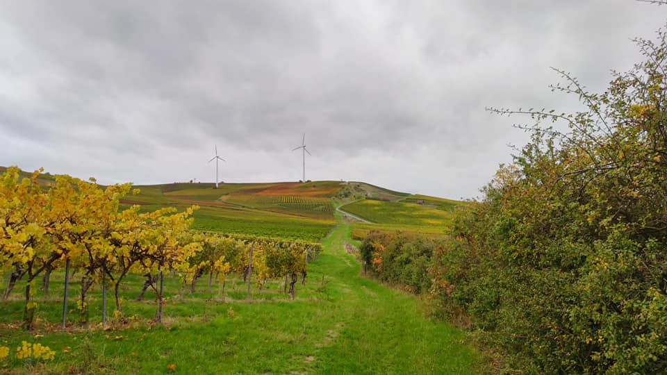 Hiwweltour Zornheimer Berg