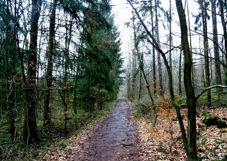Frohn-Wald-Weg