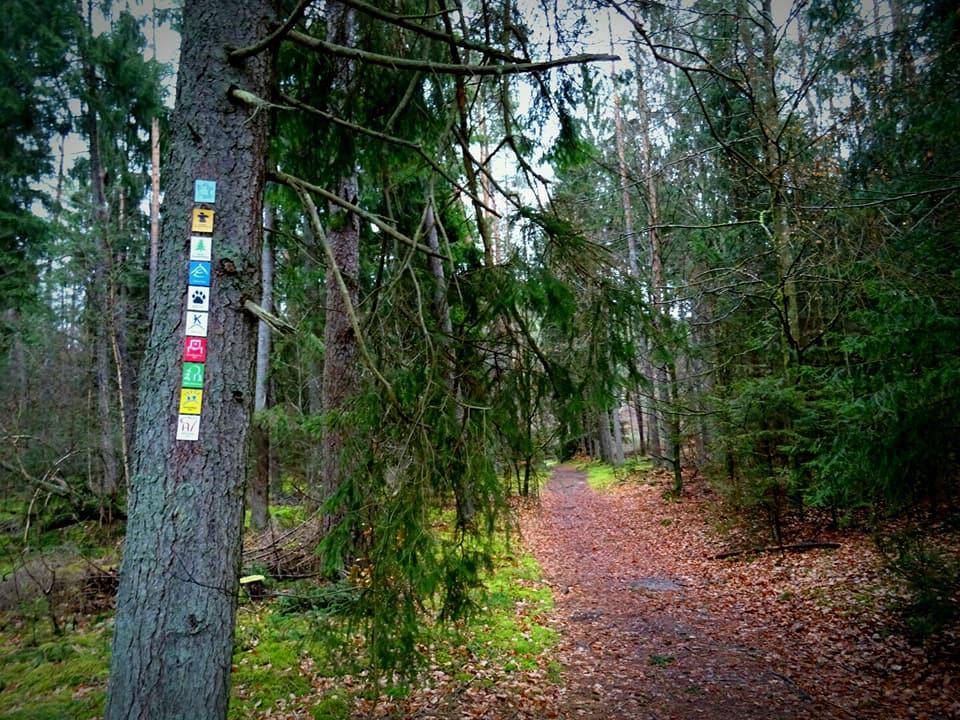 Stiller Wald-Tour