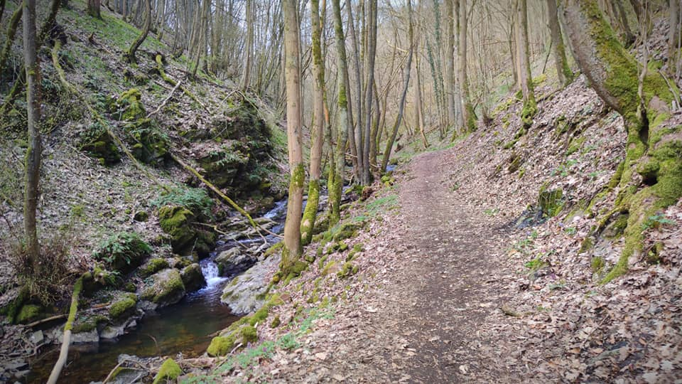 Vitaltour Drei-Burgen-Weg