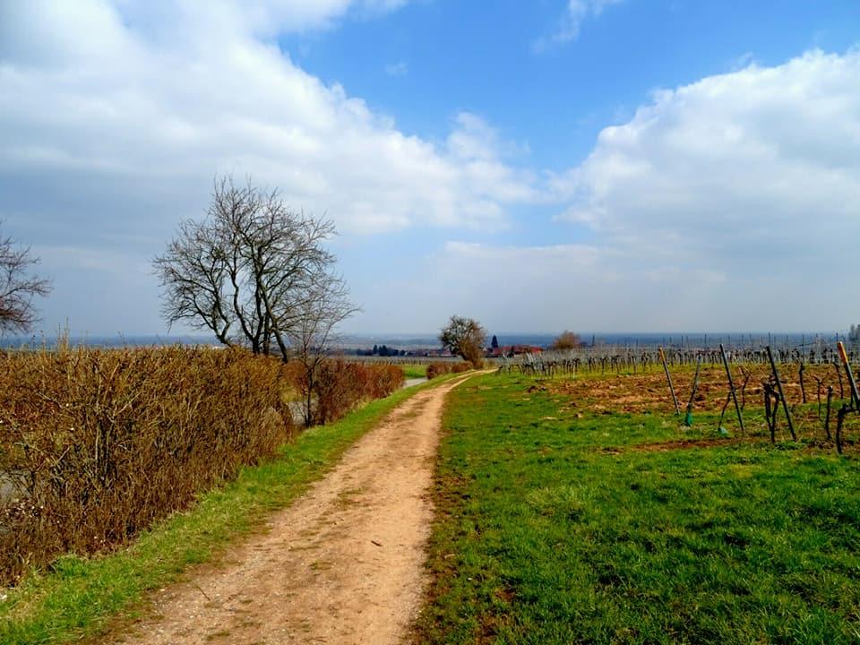 Pfälzer Mandelpfad (Rundweg 2)