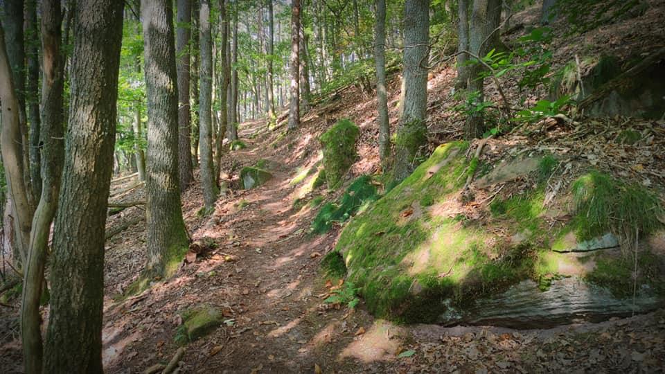 Lindelbrunnweg